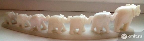 Слоники мраморные. Фото 1.