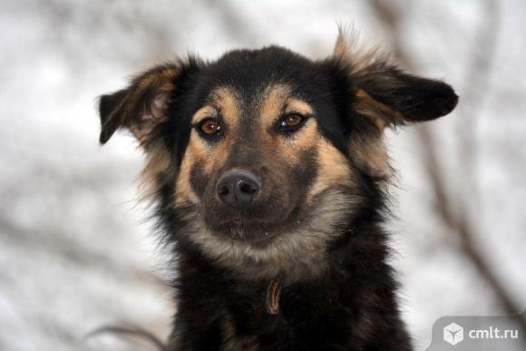 Собака в дар. Фото 2.