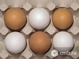 Инкубационное яйцо кур несушек