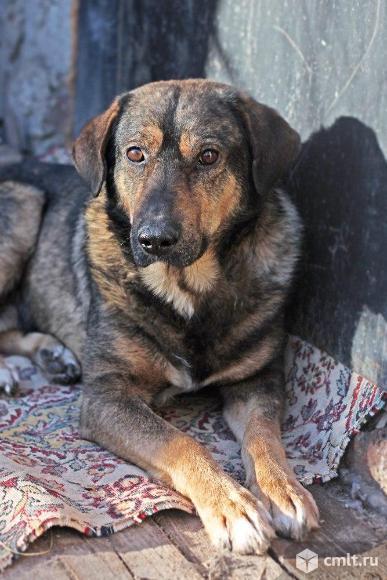 Мудрый пес Цезарь