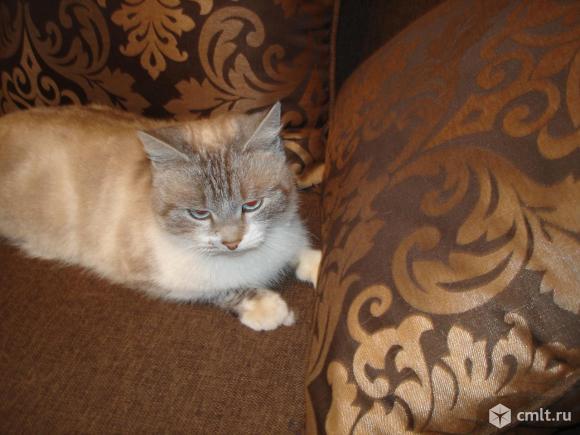 Очаровательная молодая кошечка ждет своего хозяина