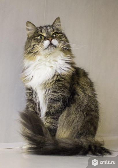 Фиона / кошка в приюте