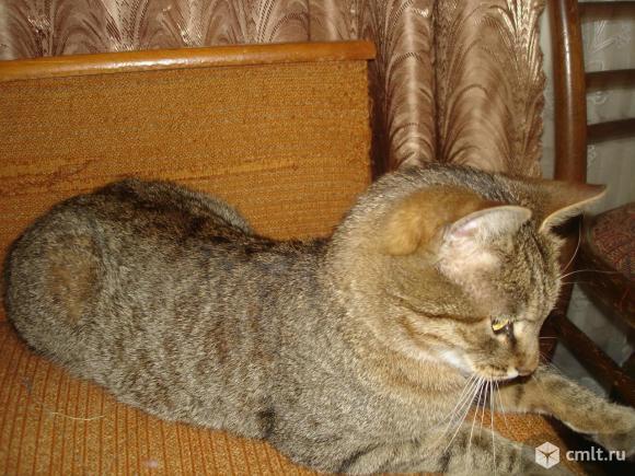 Молодой кот Васяня ищет надежных любящих хозяев