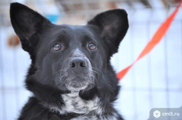 Ищет дом собака Бренда