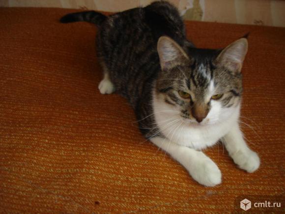 Добрый котик-подросток - в надежную семью