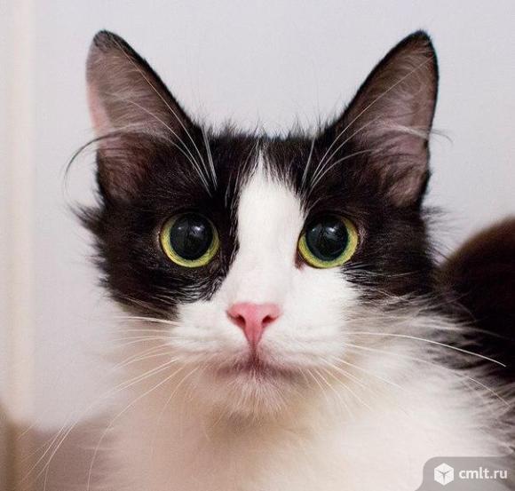 Кошечка Веста в заботливые руки. Фото 3.