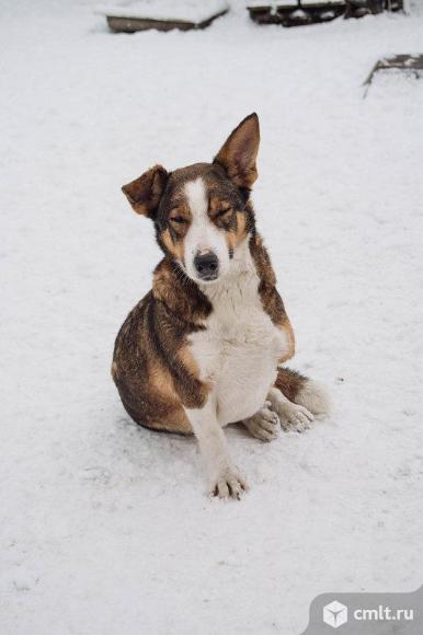 Особенная собака. Фото 1.