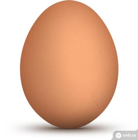 Яйцо инкубационное кур смешанных пород