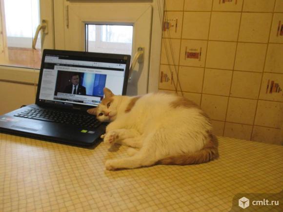 Отдам кота Рысика в добрые  руки. Фото 3.