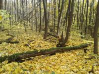 дрова лес