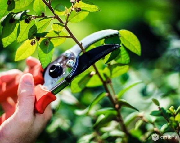 обрезка деревьев качественная!