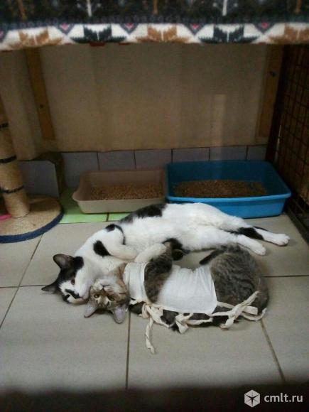 Котик Немо ищет дом