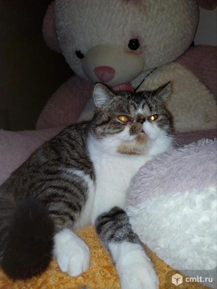 Котик- экзотик для вязки. Фото 2.
