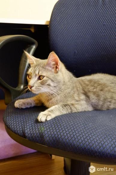 Особенный котенок Нафанчик в особенный дом!