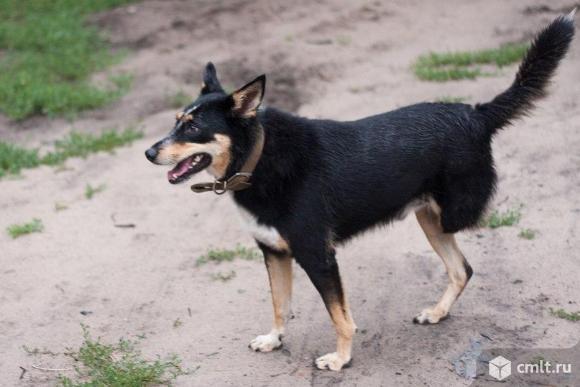 Умный пес по имени Морс!. Фото 6.