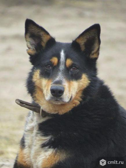 Умный пес по имени Морс!. Фото 1.