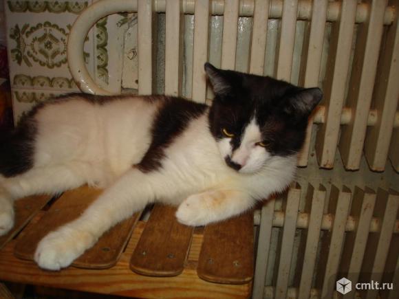 Котик-подросток Тимошка - в любящую надежную семью