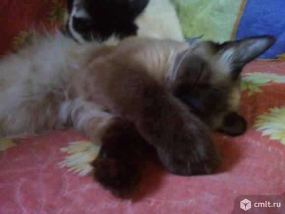 Молодой котик