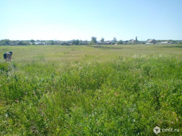 Луг с травой на сено, вдалеке полоска огорода , который обрабатывается и пашется под зиму.Территория участка до конца той полоски огорода.