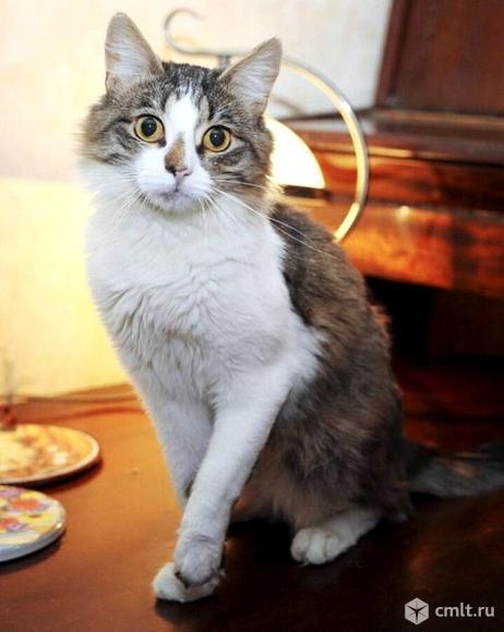 Кот Семка ищет дом