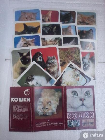 Набор открыток СССР . Кошки.. Фото 1.