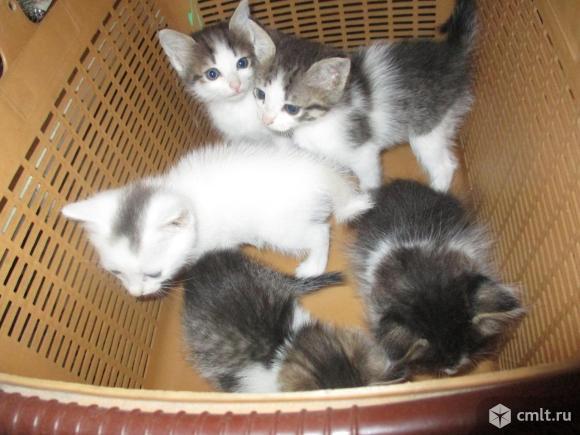 Котята оптом и в розницу