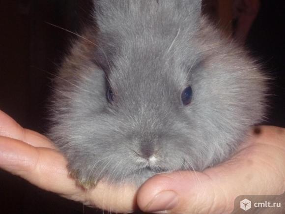 Крольчата декоративные, 1 и 2 мес., 8 шт., по 500 р
