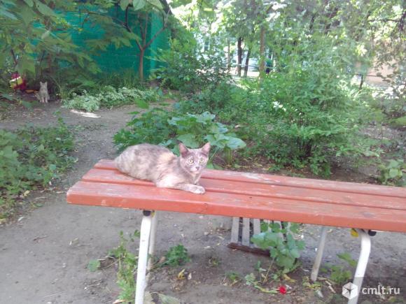 Симпатичные кошки нуждаются в доме