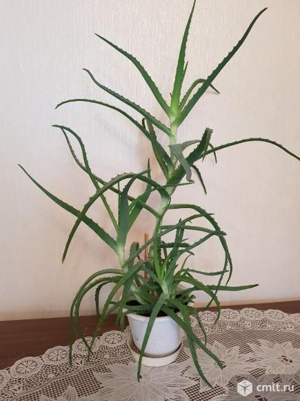 Комнатное растение. Фото 1.