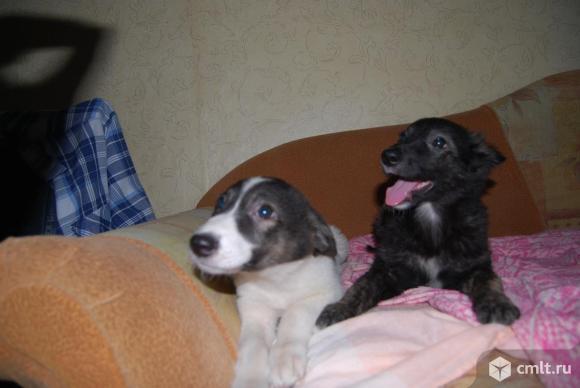 Две симпатичные и умные девчушки ищут дом и хозяина.. Фото 1.