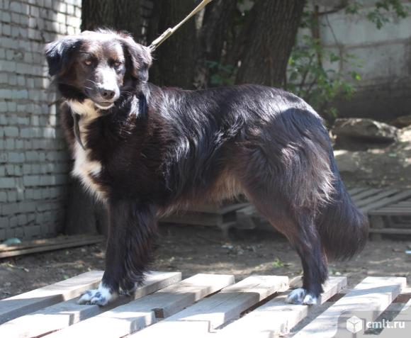 Молодая собачка Джессика. Фото 1.