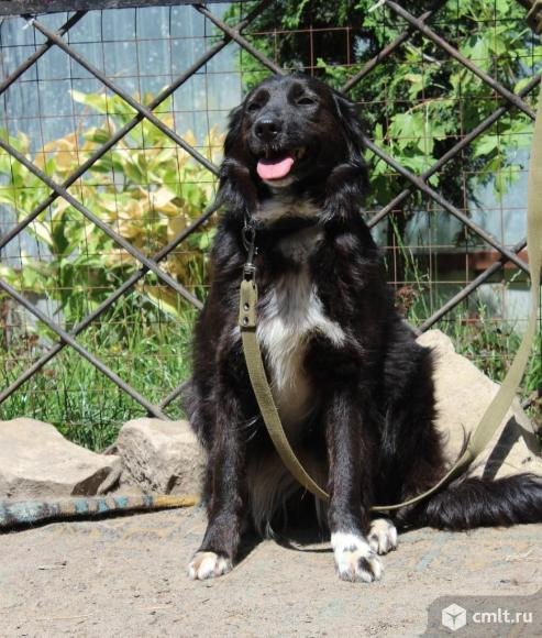 Молодая собачка Джессика. Фото 3.