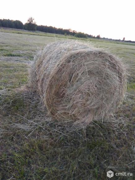 Продам сено в рулонах по 300 кг возможна доставка. Фото 3.