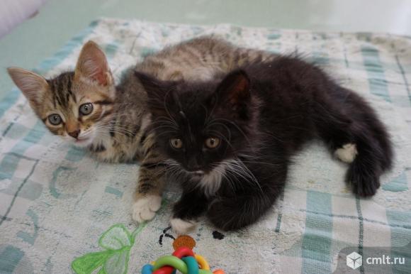 Котята малыши ищут мам-пап