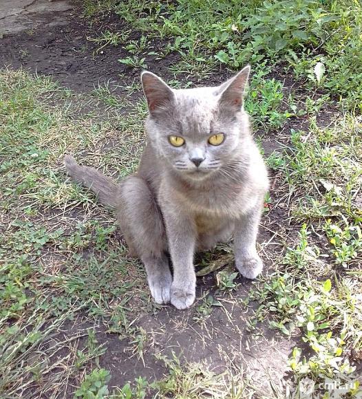 Кошечка  ищет дом. Фото 5.
