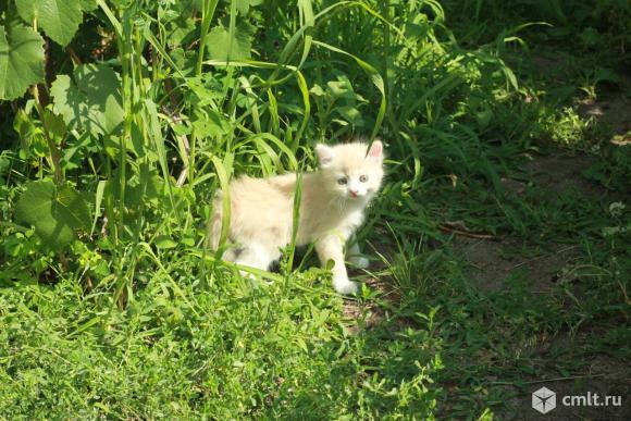 Замечательные котята ищут любящих хозяев