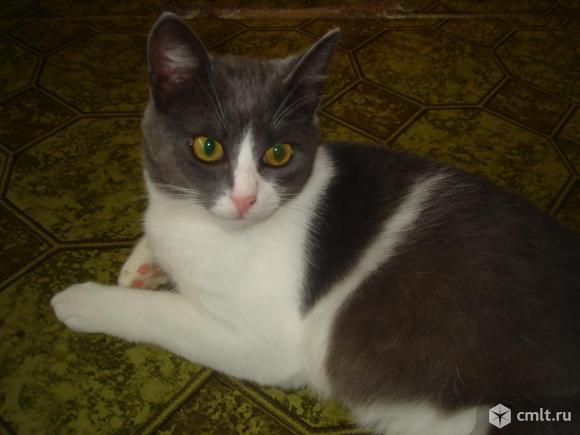 Котик-подросток Дымок ищет надежную любящую семью