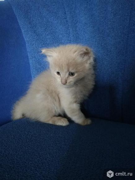 Подарю пушистых котят(мальчиков)