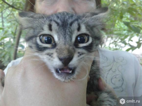 Котенок Тиг ищет дом. Фото 1.
