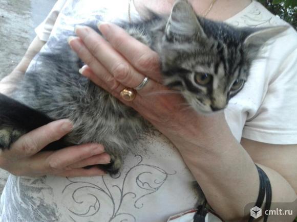 Котенок Тиг ищет дом. Фото 5.