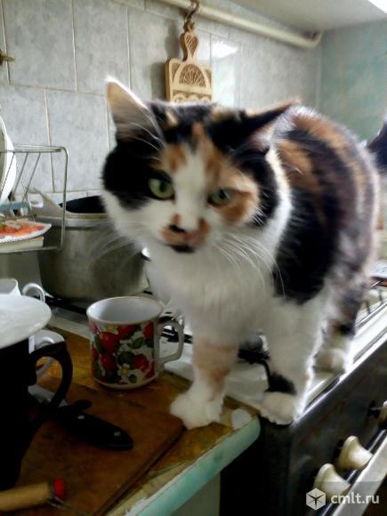 Ищу пропавшую кошку