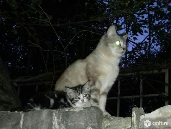 Выброшенные породистые кошка и котенок в добрые руки