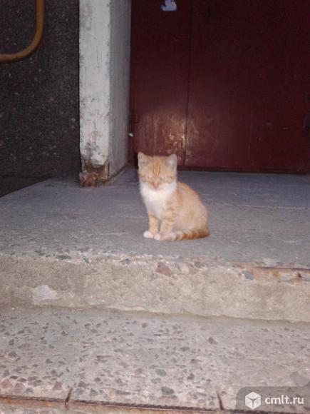Рыжий  котенок  в  добрые  руки