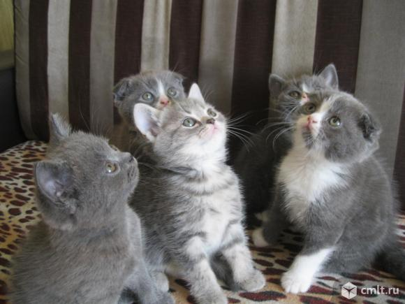 Котятки плюшевые