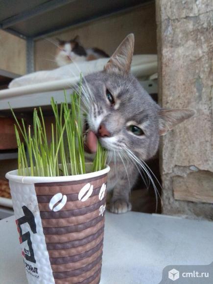 Хочу вас познакомить с кошкой Ясей!
