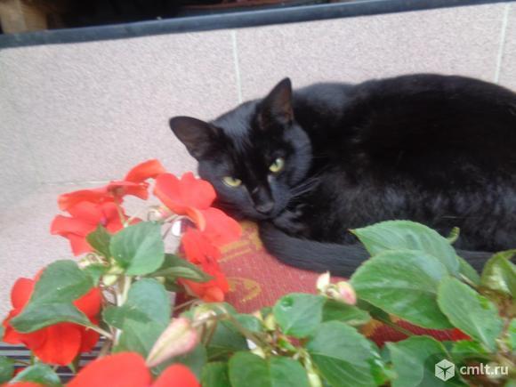 Шикарный молодой кот мышелов.