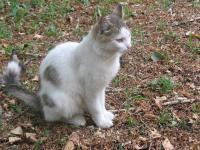 кот белый серый камышовый пятнистый