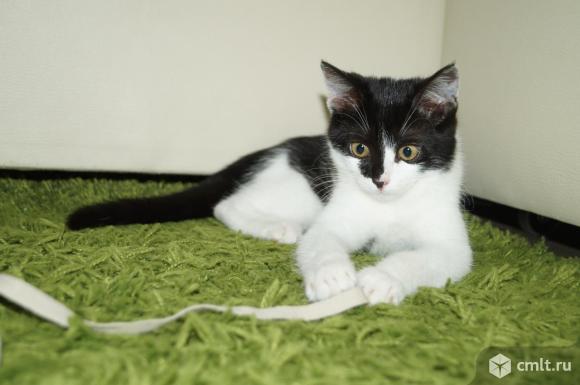 Котёнок Мици добрым людям в дар. Фото 3.