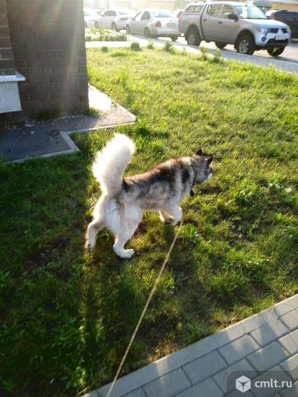 найдена собак