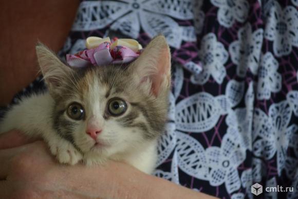 Котенок  - девочка, в хорошие руки